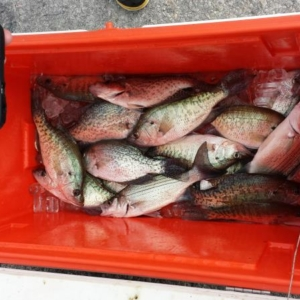 new-year-crappie
